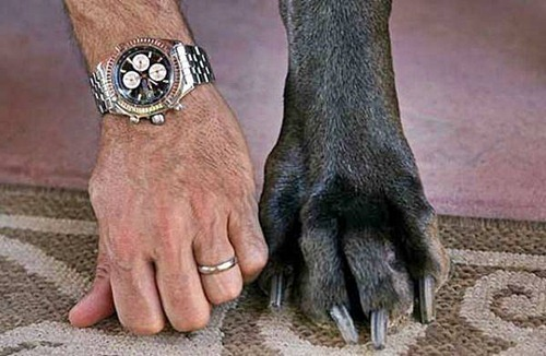 Giant George paw