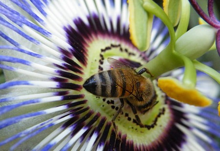 Passion and Bee