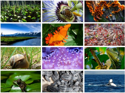 Bing Earth Day Photo Contest Windows 7 Theme