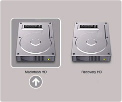 Lion_Recovery HD