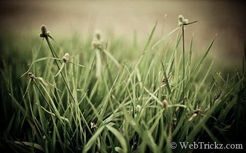 The Grass Ain't Greener